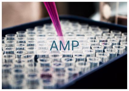 AMP bord blanc